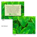 Kalo Note Cards - Small